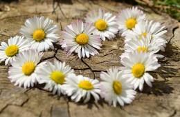 Wiosna z Geovitą